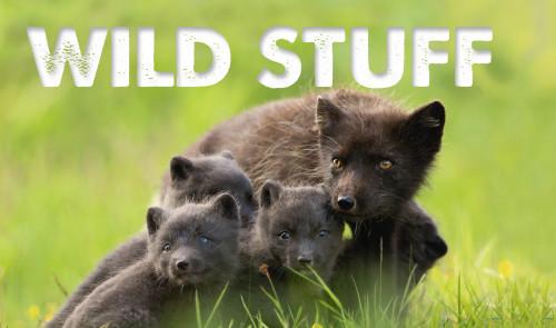 Wild Stuff