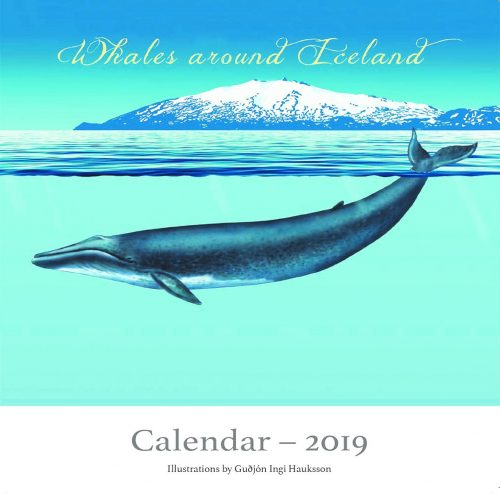 Whales around Iceland: Calendar 2019